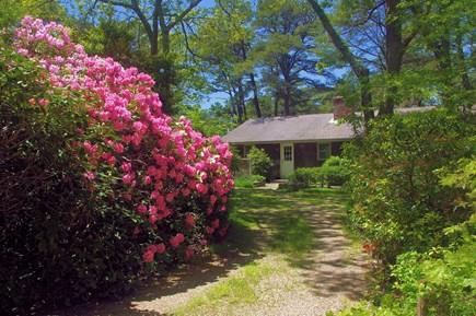 Wellfleet Cape Cod vacation rental - Flowering bushes in the Springtime