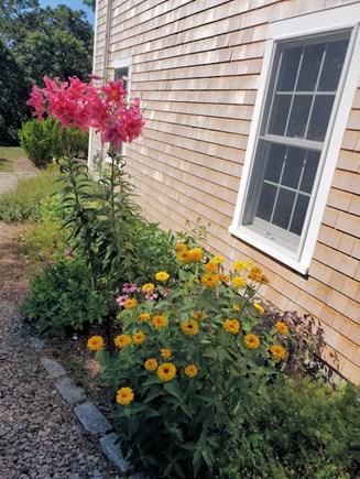 Chatham near Ridgevale Beach  Cape Cod vacation rental - Flowers in Bloom!