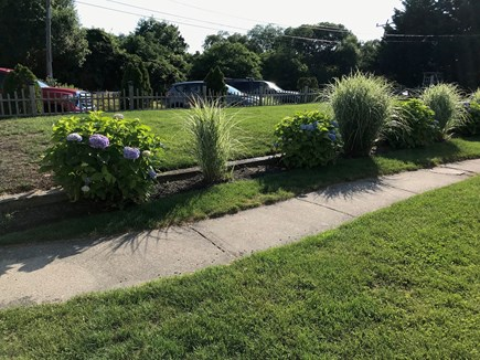 Yarmouth, Lewis Bay Cape Cod vacation rental - Front yard