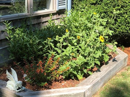 Eastham Cape Cod vacation rental - Just some of the gardens here.