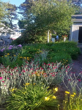 Harwich Cape Cod vacation rental - In Bloom
