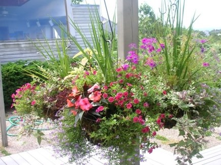 South Truro Cape Cod vacation rental - Flowers to enjoy!