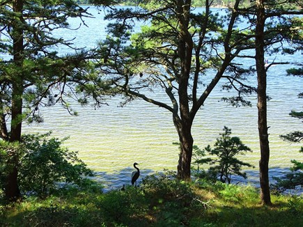 Wellfleet Cape Cod vacation rental - View of water from deck, direct access to Gull Pond