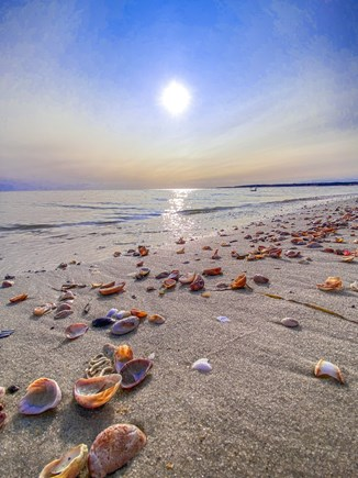 W. Chatham  Cape Cod vacation rental - Hardings Beach