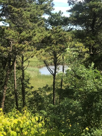 Truro Cape Cod vacation rental - View of small pond (not swimmable) from kitchen picture window