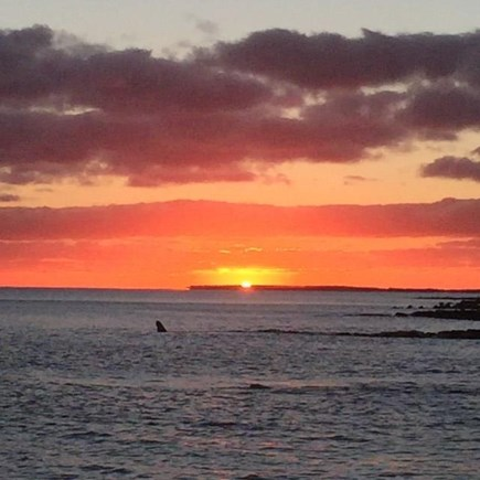 Harwich, Oceanfront Condo Cape Cod vacation rental - Sunset on Nantucket Sound