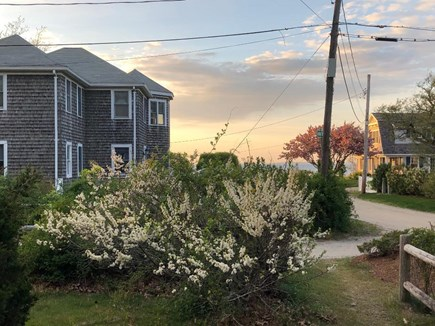 Brewster, Pineland Park Cape Cod vacation rental - Spring blossoms