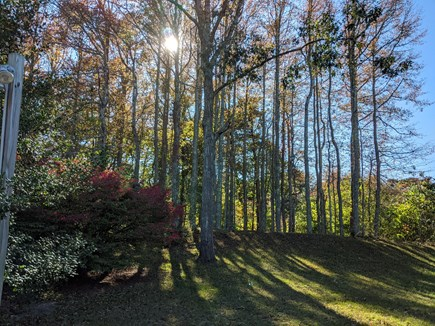 Eastham Cape Cod vacation rental - Mature pine and other beautiful trees surround the house
