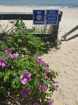 Dennis Port Cape Cod vacation rental - Entrance walkway to private Dennis Seashore beach