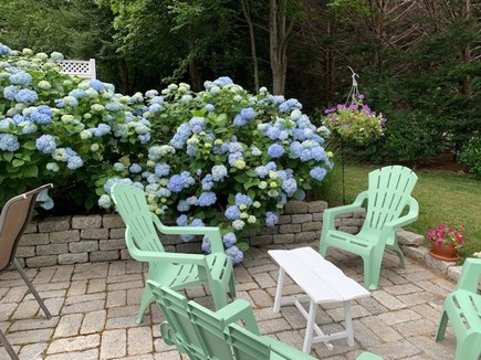Orleans Cape Cod vacation rental - Family patio surrounded by hydrangeas