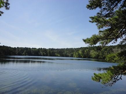 Wellfleet Cape Cod vacation rental - Dyer Pond accessible via neighborhood path thru the woods!