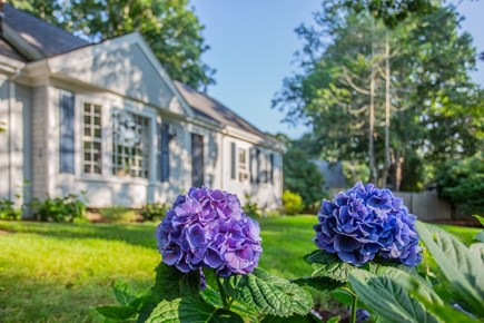 Hyannis/Centerville LIne Cape Cod vacation rental - Front of home with our favorite hydrangeas.