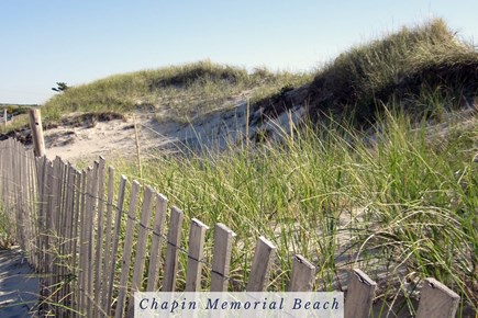 East Dennis Cape Cod vacation rental - Dunes on the Way to Chapin Memorial Beach.