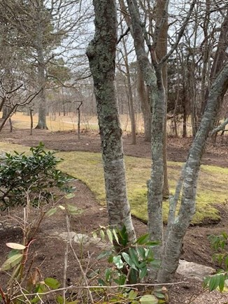 New Seabury Cape Cod vacation rental - View from back of condo