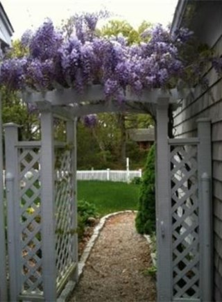 South Yarmouth Cape Cod vacation rental - Wisteria covered arbor another detail making you feel welcome.