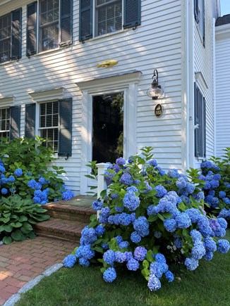 Brewster Cape Cod vacation rental - Summertime on Cape Cod