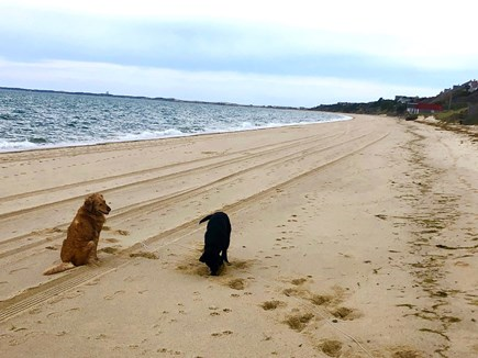 North Truro Cape Cod vacation rental - On the beach