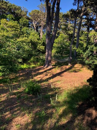 Eastham Cape Cod vacation rental - Naturalized yard, wildlife & birds are seen, view living room