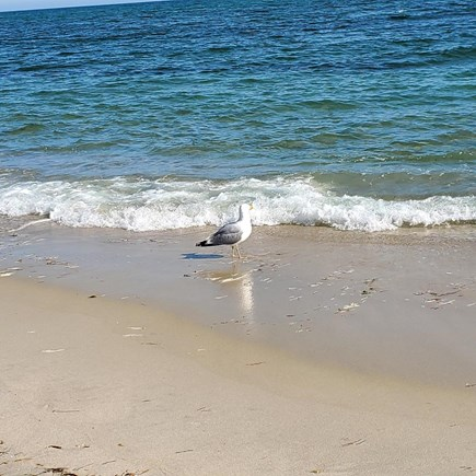 West Dennis Cape Cod vacation rental - Join Friend Seagull in watching the water...