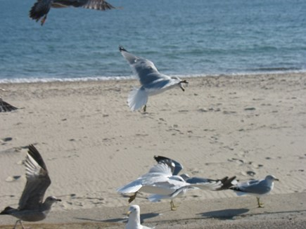 Falmouth Cape Cod vacation rental - Surf Drive Beach