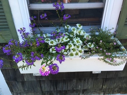 Truro, Seagull Cottage (#9) Cape Cod vacation rental - Nice flowers surrounding the deck