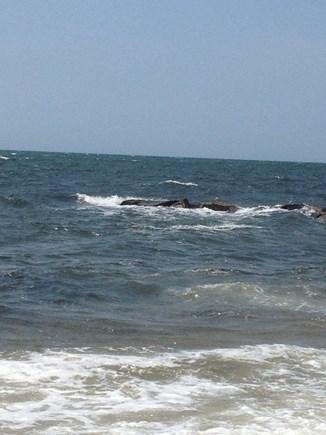 Dennisport Cape Cod vacation rental - Beautiful Cape Cod ocean