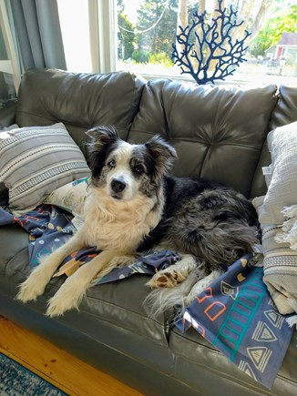 PLYMOUTH MA vacation rental - We welcome your well behaved and fully house trained pups