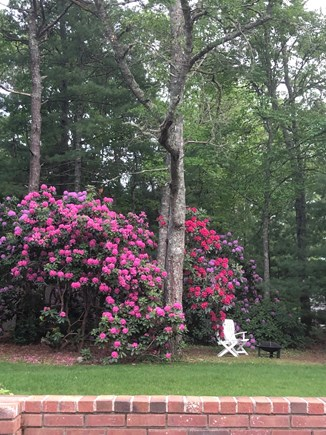 Barnstable, Osterville Cape Cod vacation rental - Back yard