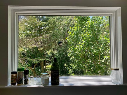 Provincetown Cape Cod vacation rental - Window of kitchenette, above sink, faces gardens.
