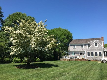 Eastham Cape Cod vacation rental - Over an acre of flat manicured grass in private back yard