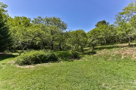 Truro Cape Cod vacation rental - Run wild in the meadow!