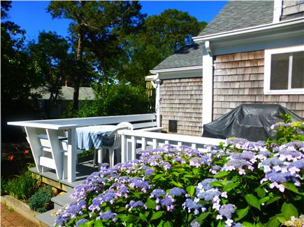 Dennis Port Cape Cod vacation rental - Backyard with deck and gas grill