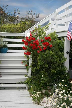 East Sandwich Cape Cod vacation rental - The cottage is landscaped for your pleasure