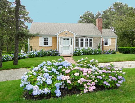 Chatham Cape Cod vacation rental - Circular driveway and beautiful hydrangeas
