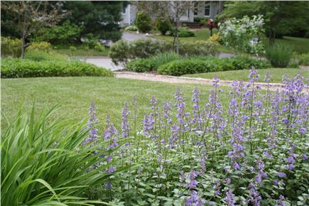 Hyannis Cape Cod vacation rental - Nicely landscaped front yard