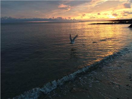 Dennis Port Cape Cod vacation rental - Endless sunset opportunities