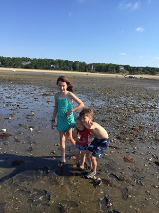 Wellfleet Cape Cod vacation rental - Adventures at low tide...(note house in background!)