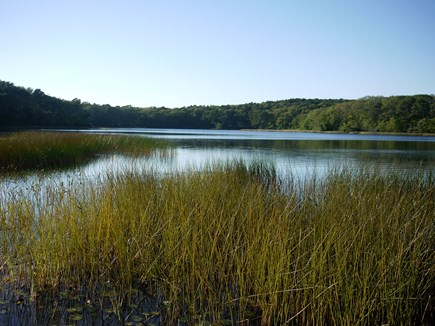 Wellfleet Cape Cod vacation rental - Gull pond within walking distance of house