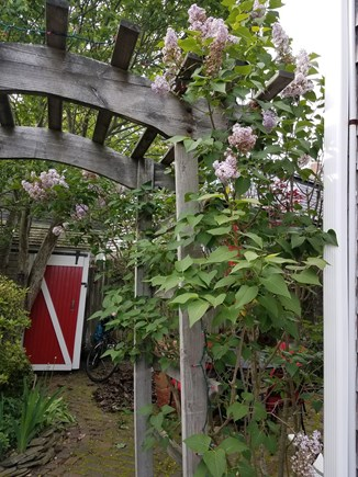 Provincetown Cape Cod vacation rental - Entrance to private backyard