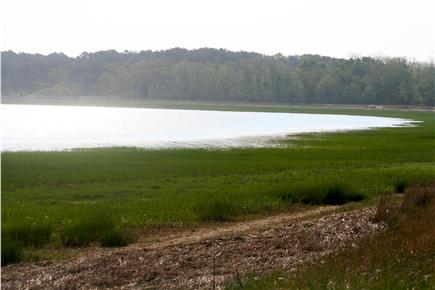 Wellfleet Cape Cod vacation rental - Walking along the cove