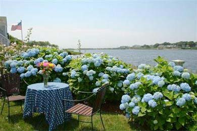 East Falmouth (Maravista) Cape Cod vacation rental - Picket fence with Roses and Hydrangeas