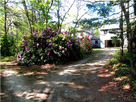 Pocasset Pocasset vacation rental - Looking down driveway from street