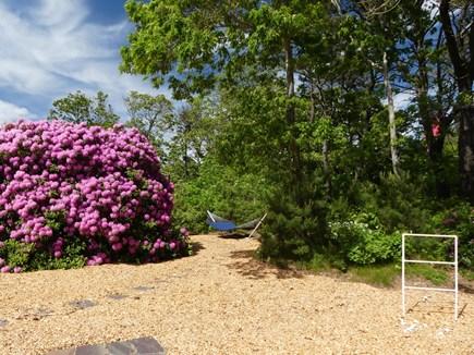 Eastham Cape Cod vacation rental - Back yard and hammock