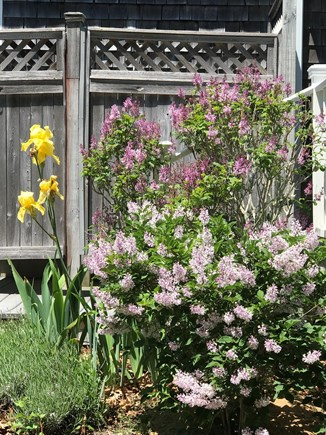 Eastham Cape Cod vacation rental - Outdoor shower with dressing room and nearby lilacs and iris....