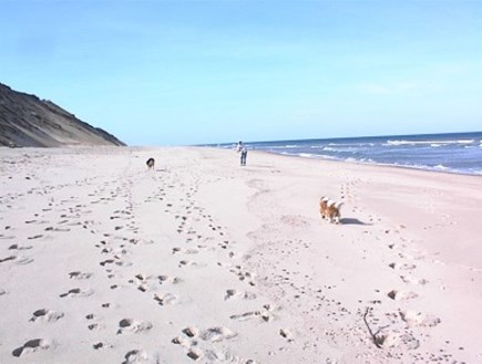 Eastham Cape Cod vacation rental - Explore the Outer Cape's beautiful beaches