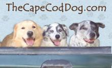 The Cape Cod Dog