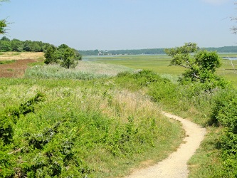 hiking at fort hill, eastham, cape cod