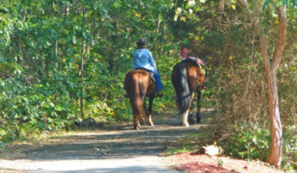 Horseback riding Cape Cod Rail Trail