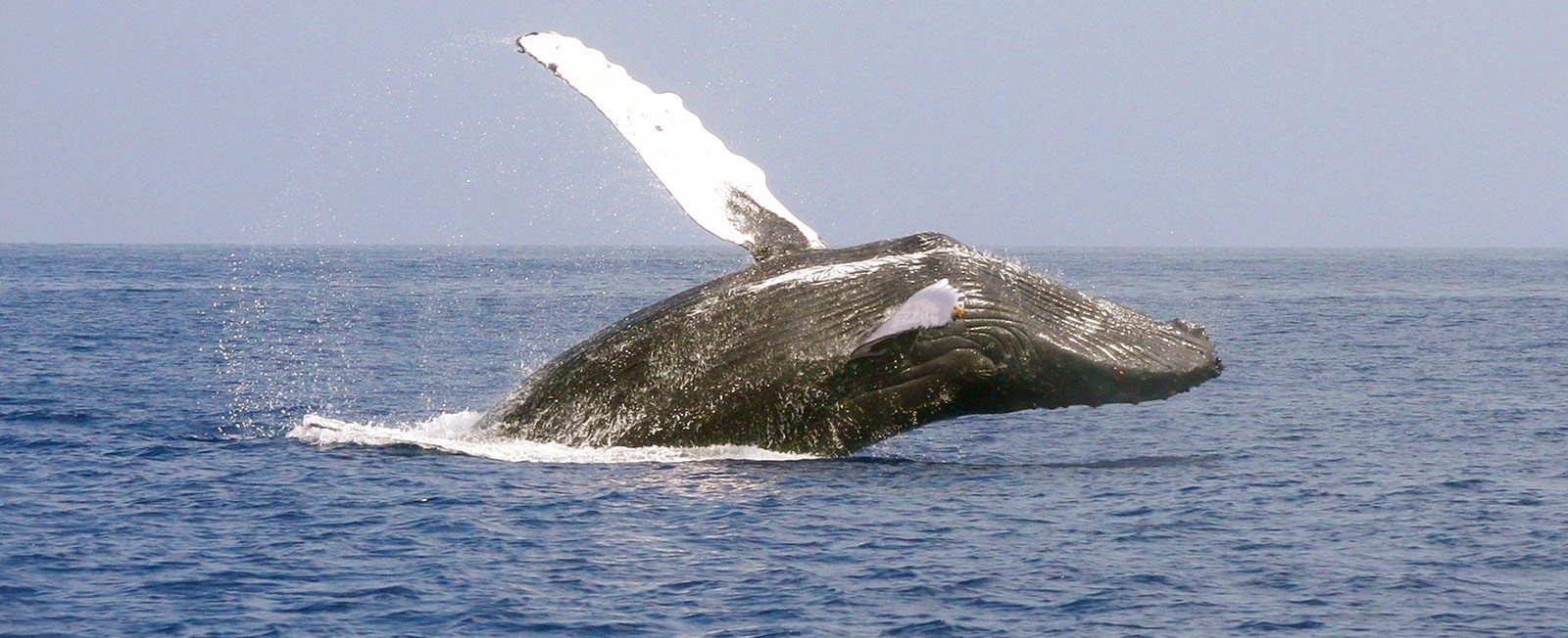 Whale watching season is from April though October. There are several types of whales that you might see!