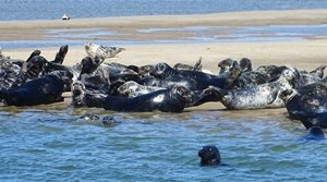 Best Seal Tours on Cape Cod